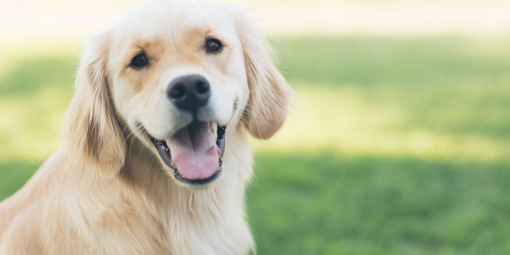 pet health insurance in Finlayson, Hinckley or Mora STATE | Town and Country Insurance